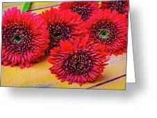 Moody Red Gerbera Dasies Greeting Card