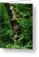 Moody Tree In Forest Greeting Card