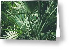 Moody Tropical Leaves Greeting Card
