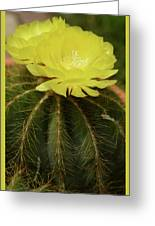 Moon Cactus Blooms Greeting Card