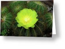 Moon Cactus Greeting Card