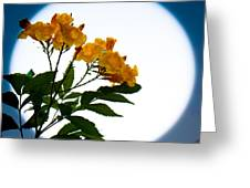 Moon Flowers Greeting Card