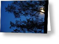 Moon Hiding In The Tree Greeting Card