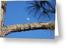 Moon On A Pine Bough Greeting Card