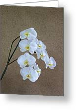 Moon Orchid Greeting Card