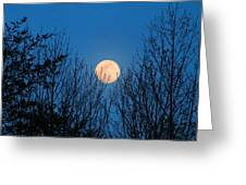 Moon Rising In The Trees Greeting Card