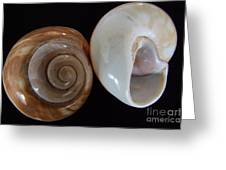 Moon Shells Greeting Card