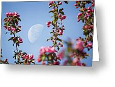 Moon Through The Crabapple Blossoms Greeting Card
