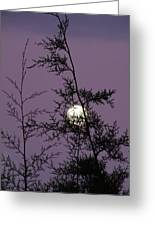 Moon Trees Greeting Card