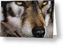 Moon Wolf Greeting Card