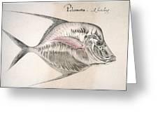 Moonfish, 1585 Greeting Card