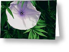 Moonflower Greeting Card