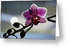 Moonlight And Orchid Greeting Card