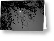 Moonlight - B And W Greeting Card