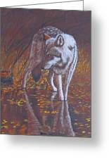 Moonlight Drink Greeting Card by Lorraine Foster