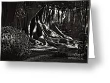 Moonlight In The Park - Valencia Greeting Card