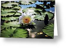 Moonlight Lily  Greeting Card