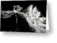 Moonlight Promenade - A Passion Fruit Production Greeting Card