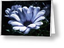 Moonlit Petals. From The Beautiful Greeting Card