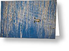 Moorhen In The Reeds Greeting Card