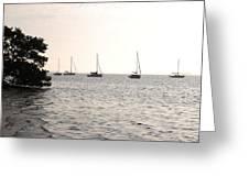 Mooring Bay Greeting Card