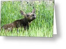Moose Baby Greeting Card