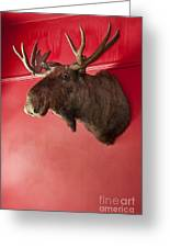 Moose Head Mounted On A Wall. Greeting Card