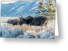 Moose In Cold Winter Ice Greeting Card