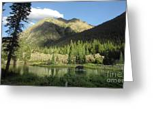 Moose In The Elk Creek Beaver Ponds Greeting Card