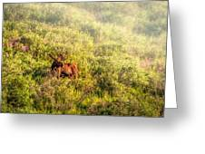 Moose In The Mist Greeting Card by Claudia Abbott