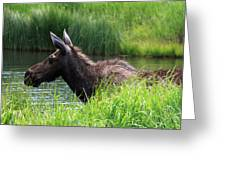 Moose In The Pond - 1 Greeting Card