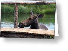 Moose In The Pond Greeting Card