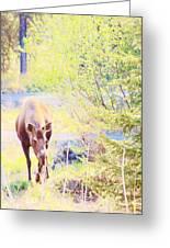 Moose In The Yard Greeting Card