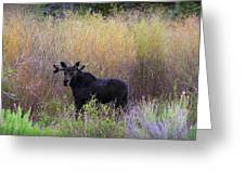Moose In Velvet Greeting Card
