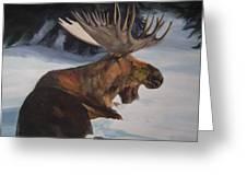 Moose In Winter Greeting Card