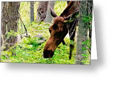 Moose Munching Greeting Card