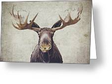 Moose Greeting Card