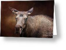 Moose Portrait Greeting Card