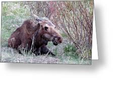 Moose Relaxing Greeting Card