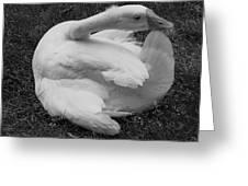 Moose The Goose Greeting Card