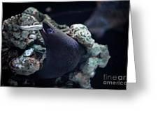 Moray Eel Eating Little Fish Greeting Card