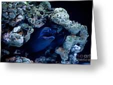 Moray Eel Or Muraenidae Fish Greeting Card