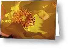 Morden Sunrise Greeting Card