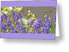 More Lavender Love Greeting Card