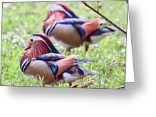 More Mandarin Ducks Greeting Card
