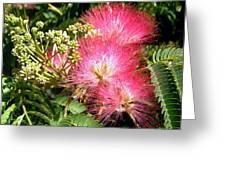 More Mimosa Greeting Card