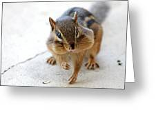 More Nuts Please Greeting Card