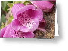 More Pink Bells Greeting Card