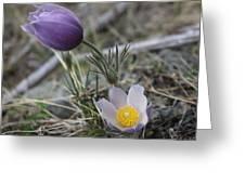 More Purple Flowers Greeting Card