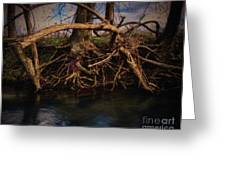 More Roots In Creek Greeting Card